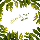 Spring green leaves border. Royalty Free Stock Photos