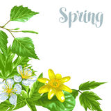 Spring green leaves and flowers. Background with plants twig buds.  vector illustration