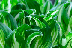 Spring green leaves Royalty Free Stock Photos