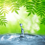 Spring green leaves of tree above the water level. Royalty Free Stock Photos