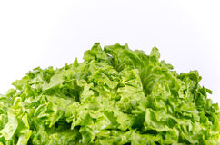 Texture of spring green lettuce leaves isolated on a white backg Stock Photo
