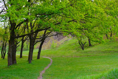 Spring green meadow with big oak trees and lonely trail Stock Photos