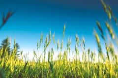 Spring Green Meadow Stock Photos