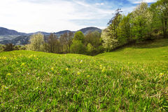 Spring green meadow landscape Royalty Free Stock Photo