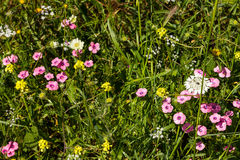 Spring green meadow with pink and white flowers. Mountains in spring Stock Photo