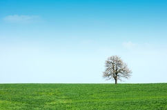 Spring green meadow and tree Stock Photography