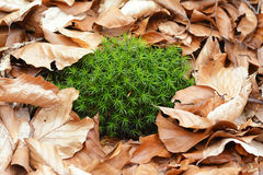 Spring green moss Royalty Free Stock Images