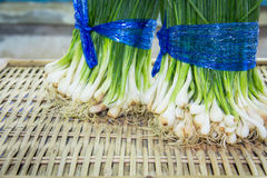 Spring green onion with chives Stock Photos
