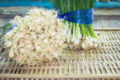 Spring green onion with chives Royalty Free Stock Photography