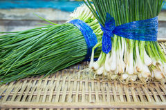 Spring green onion with chives Royalty Free Stock Images