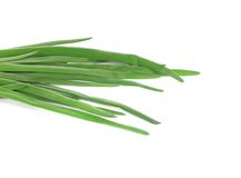 Spring green onions. Stock Image