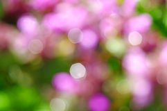 Spring blur background Stock Photo