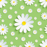 Spring green seamless pattern with white chamomile Royalty Free Stock Photo