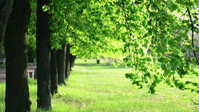 Spring green trees stock video