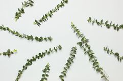 Spring green twigs of plants on gray background top view flat lay copy space. Decorative plant branch, rustic background, flowers. Composition. Minimalistic royalty free stock photos