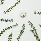 Spring green twigs of plants on gray background top view flat lay copy space. Decorative plant branch, rustic background, flowers. Composition. Minimalistic royalty free stock photography