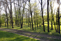 The spring green wood Royalty Free Stock Photo