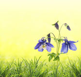 Spring green, yellow, sunny background Royalty Free Stock Image