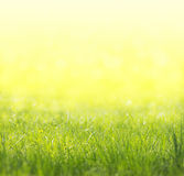 Spring green, yellow, sunny background,summer Stock Image