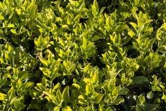 Spring Greenery Royalty Free Stock Photo