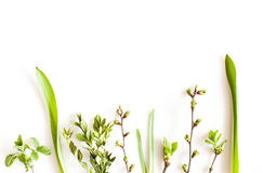 Spring greenery plants. Over white background. Flat lay forest and nature concept Royalty Free Stock Image