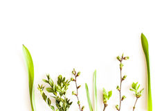 Spring greenery plants. Over white background. Flat lay forest and nature concept Royalty Free Stock Photography