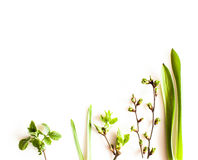 Spring greenery plants. Over white background. Flat lay forest and nature concept Stock Photos