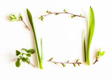Spring greenery plants. Over white background. Flat lay forest and nature concept Royalty Free Stock Photos
