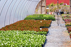 Spring greenhouse nursery. A view of fresh, new spring flower seedlings and plants growing in a nursery greenhouse or hothouse Royalty Free Stock Photos