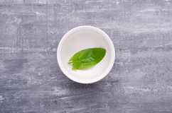 Spring greens for health.  Fresh sorrel in a dish on grey wooden. Fresh sorrel in a dish on grey wooden table. Spring greens for health Royalty Free Stock Images
