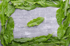 Spring greens for health. Fresh sorrel on grey wooden table. Fresh sorrel on grey wooden table. Spring greens for health Stock Images
