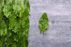 Spring greens for health.  Fresh sorrel on grey wooden table. Fresh sorrel on grey wooden table. Spring greens for health Royalty Free Stock Photo