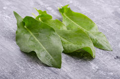Spring greens for health.  Fresh sorrel on grey wooden table. Fresh sorrel on grey wooden table. Spring greens for health Royalty Free Stock Images