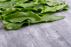 Spring greens for health.  Fresh sorrel on grey wooden table. Fresh sorrel on grey wooden table. Spring greens for health Royalty Free Stock Image