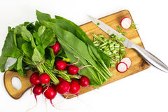 Spring greens radishes and wild garlic, sliced for vegetarian sa Royalty Free Stock Image