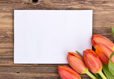 Spring greeting card Royalty Free Stock Image