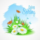 Spring greeting card with daisies. Vector. Illustration EPS10 Royalty Free Stock Photo
