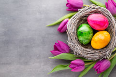 Spring greeting card. Easter eggs in the nest. Spring flowers tu Stock Images