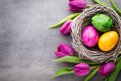 Spring greeting card. Easter eggs in the nest. Spring flowers tu Royalty Free Stock Photo