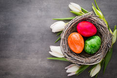 Spring greeting card. Easter eggs in the nest. Spring flowers tu Stock Image