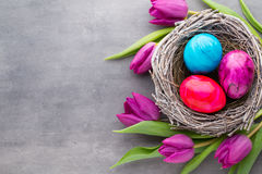 Spring greeting card. Easter eggs in the nest. Spring flowers tu Stock Photo