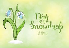 Spring greeting card with snowdrop day. April 19 Stock Photos