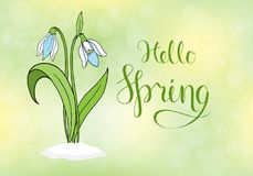 Spring greeting card with snowdrops. Stock Image