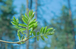 De lente groene lijn stock fotografie
