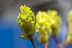 Spring growing bud Royalty Free Stock Photos