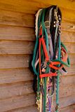 Spring Halters Stock Photos