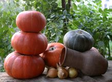 Spring harvest of a pumpkin jug and onion on a cloth. In the garden Royalty Free Stock Photos