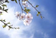 Spring Has Arrived. Spring flowers dangling in crisp blue sky stock images