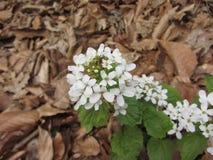 Spring has come. Flowering on mount Beshtau. Caucasus Stock Photos