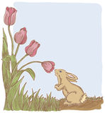 Spring Has Sprung. This little bunny stops to smell the spring tulips. Outline, strokes, color and background on separate layers. Vector art in Illustrator 8 Stock Image